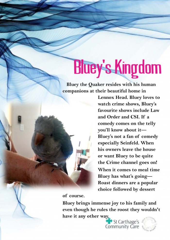 27 Bluey's Kingdom
